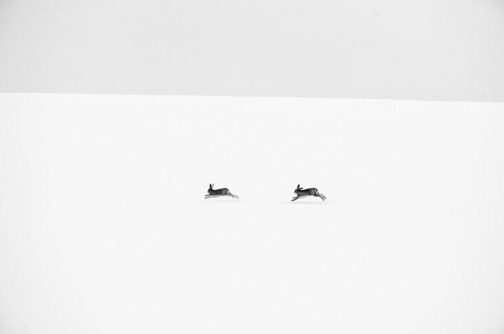 David Tipling (Reino Unido)