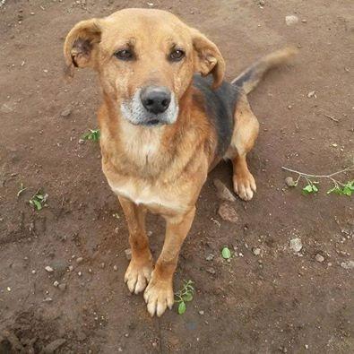 TIM, el perro sin lengua, espera desde hace 4 años por un hogar | María Elena Rozas