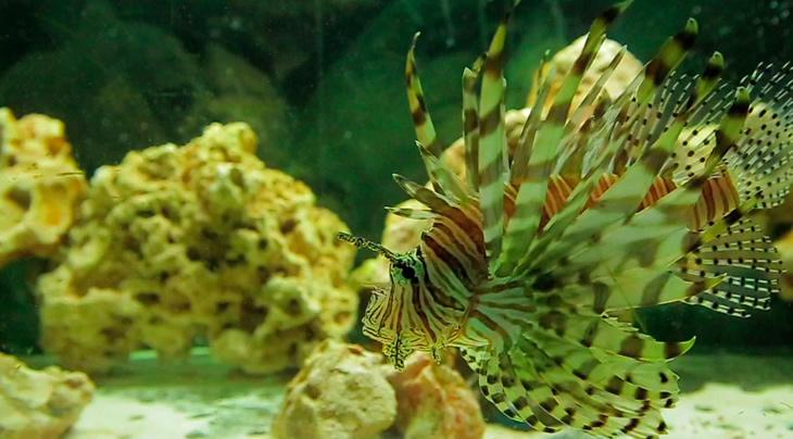 Aquarium de Santiago
