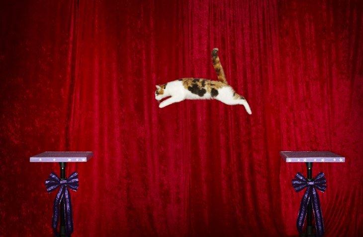 Gato saltador | GUINNESS WORLD RECORDS | AFP