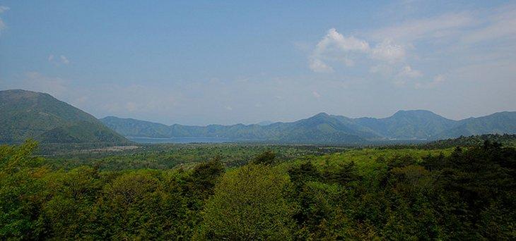 Aokigahara: El Bosque de los Suicidios Aokigahara-woodlands1