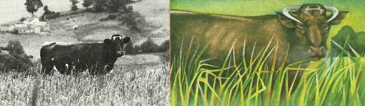 Comparativa de una escena normal con la percepción de un esquizofrénico