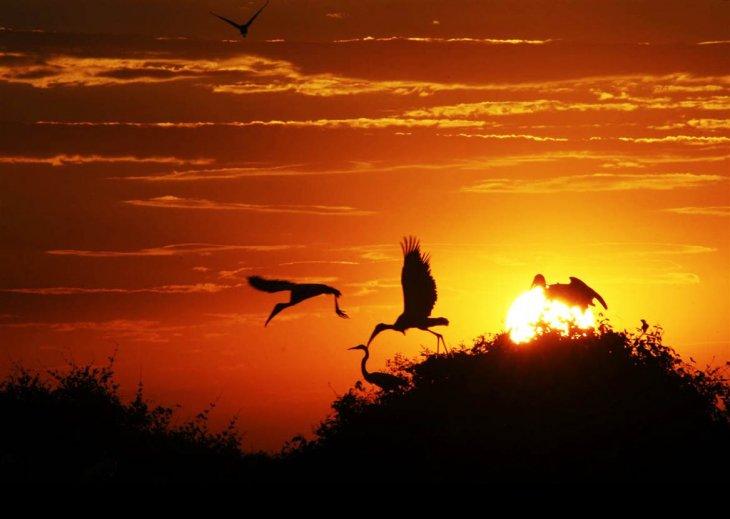 Pantanal | visitabrasil