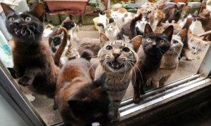 Love Meow (C)