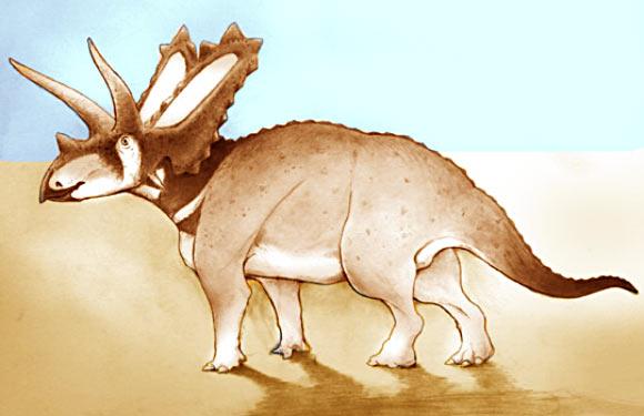 Pentaceratop | University of Bath
