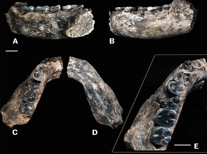 Los restos fósiles LD 350-1 fueron hallados en la Región de Afar (Etiopía) en 2013