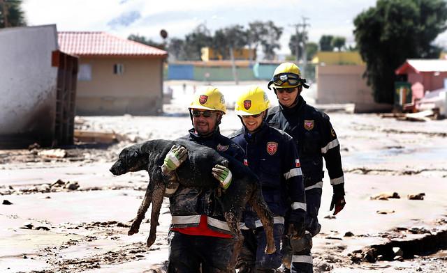 Rescatistas sacan a perro del lodo | Agencia UNO