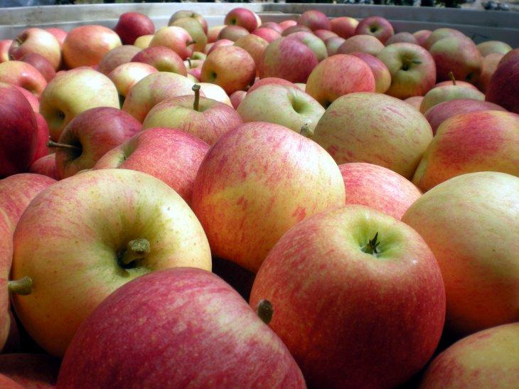 Imagen de manzanas | Fedefruta