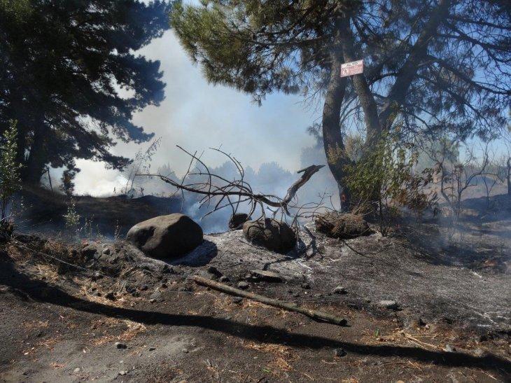 Incendio forestal en Quillón | Guillermo Escares (RBB)