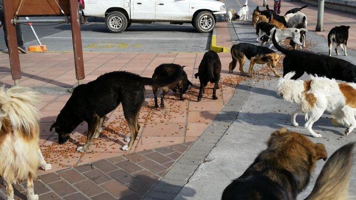 Ayudando a los Perritos de Lenga II | Facebook