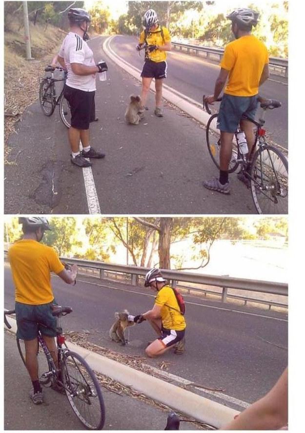 Ciclistas comparten su agua con Koala | BuzzFeed.com