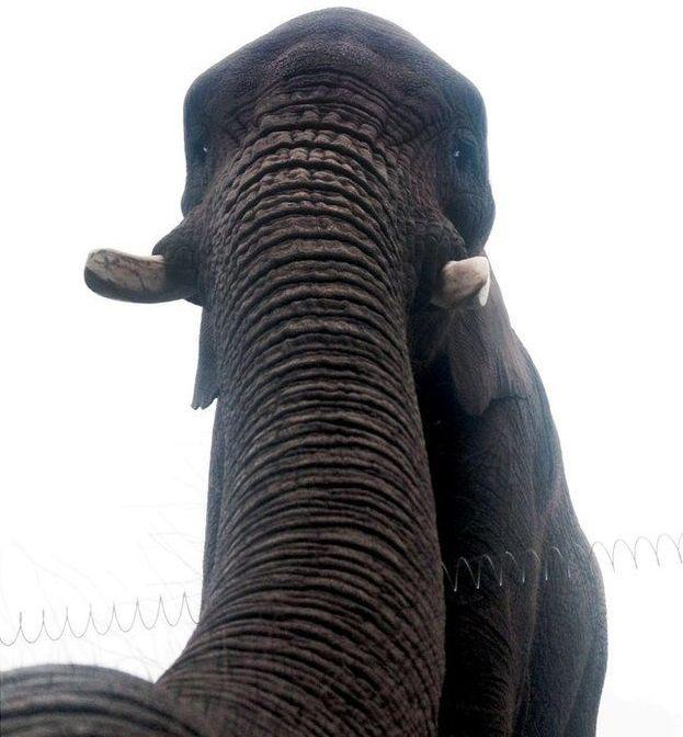 Latabe, el elefante | Ross Parry