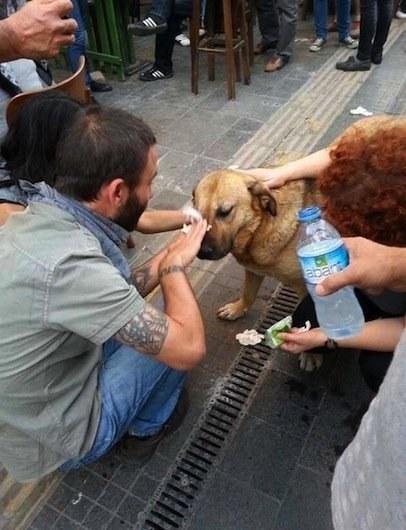 Ayudan a perrito en Turquía | BuzzFeed.com