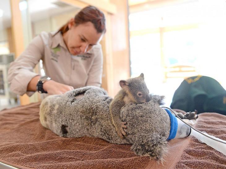 Ben Beaden | Australia Zoo