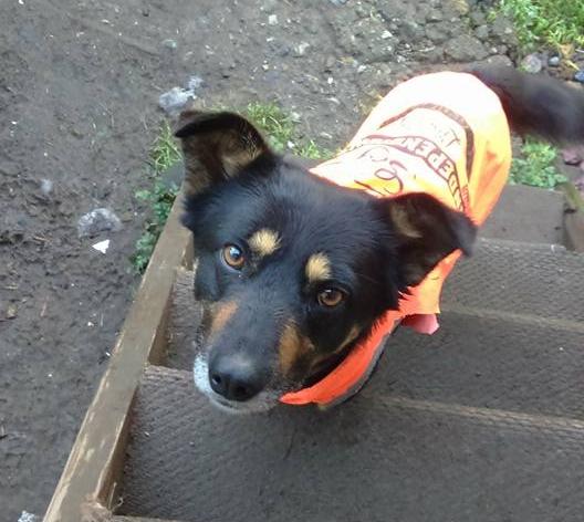 Caso maltrato animal en Chiloé | Sonia Torres