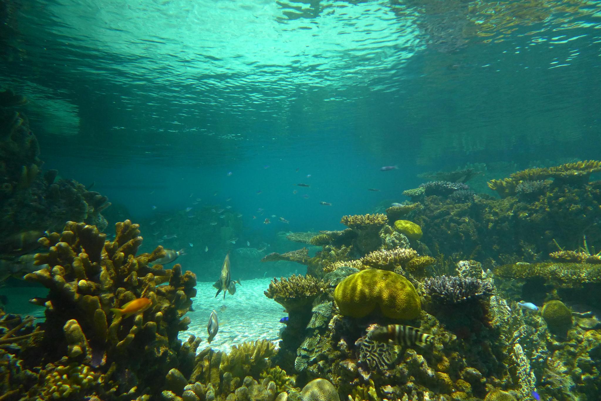 Miles de peces mueren por demoras en acuario gigante en brasil for Acuarios zona norte