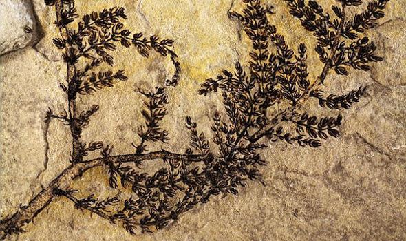 Identifican planta con flores más antigua del mundo