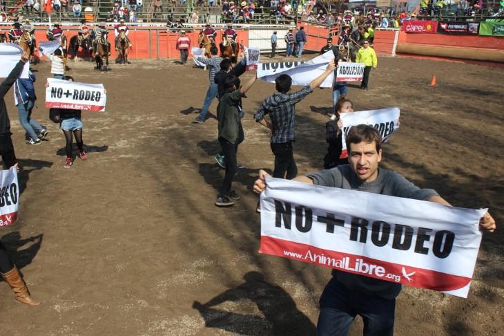 ONG Animal Libre