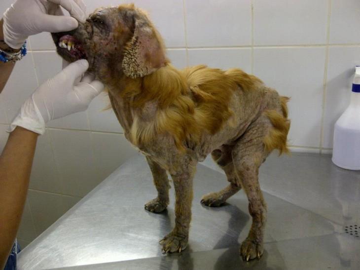 Perro maltratado | Paola Carmona