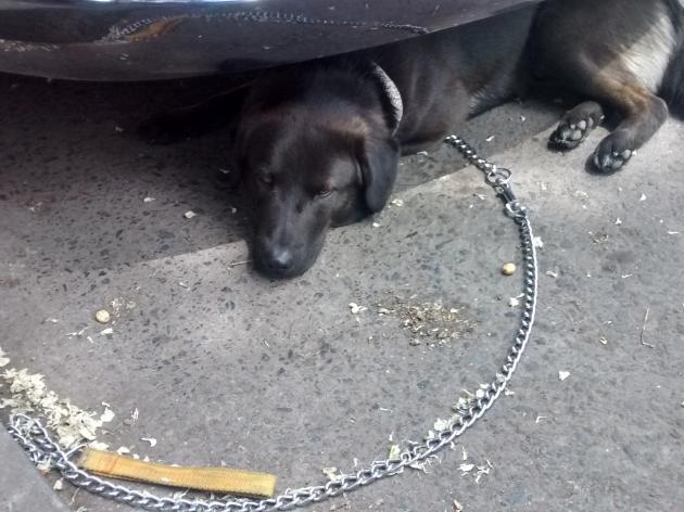 Perro busca a su dueño | Juan José Vidal