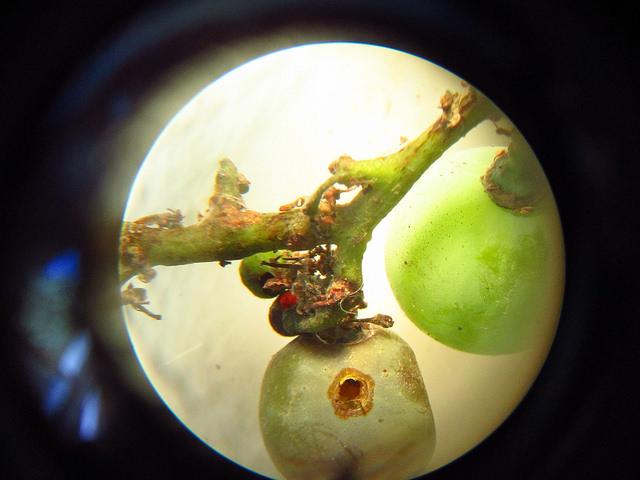 Daño de la larva | guitarclas (cc) / Flickr