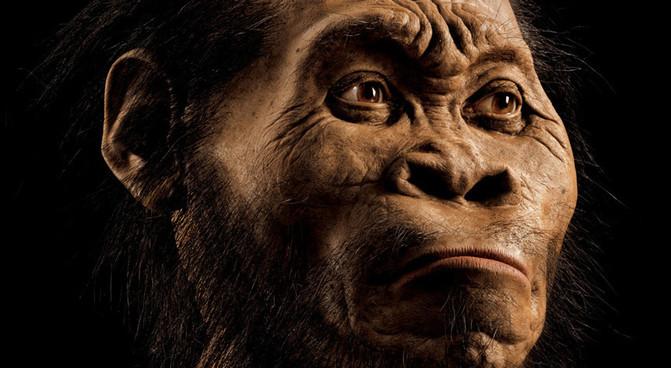 Reconstrucción de Homo naledi por el paleoartista John Gurche, que pasó más de 700 horas para recrear la cabeza a partir de los escáneres de los huesos. / Mark Thiessen/National Geographic