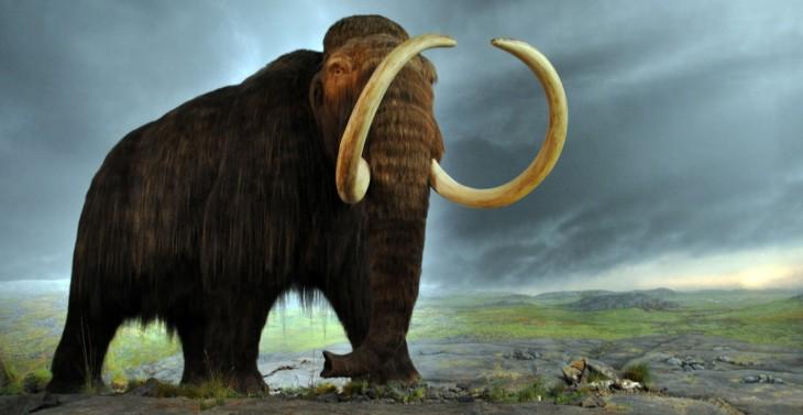 Boyalife pretende revivir mamuts para la comercialización | (cc)