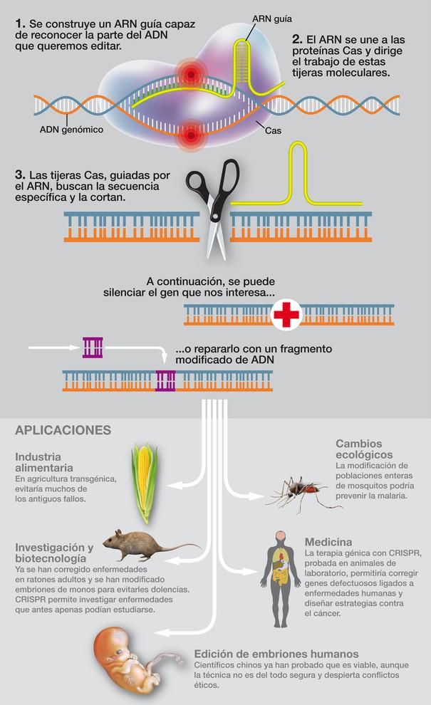Infografía: José Antonio Peñas, Sinc
