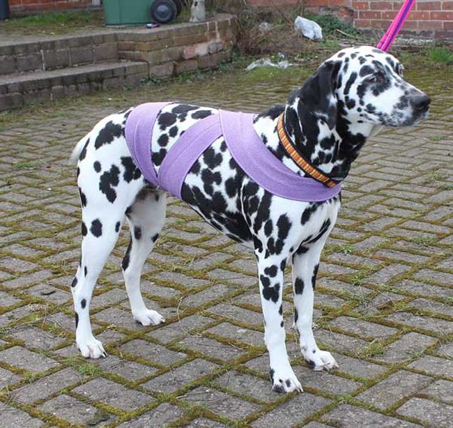www.xtra.dog