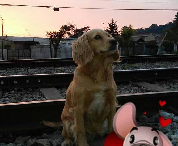Perrita abandonada junto a sus cachorros | Katia Muñoz Rubilar