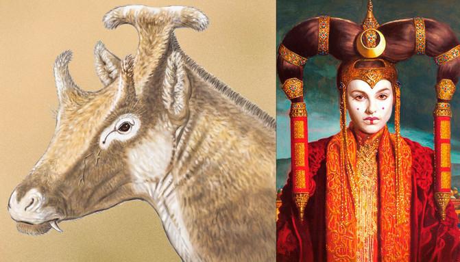El ungulado extinto Xenokeryx amidalae, mezcla de ciervo y jirafa y que vivió en Cuenca hace 16 millones de años adopta su nombra por el parecido con el peinado de la reina Amidala en la saga Star Wars l  Ilustración de Israel M. Sánchez