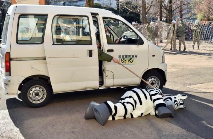 La indomable cebra | AFP / Kazuhiro Nogi
