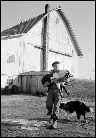 Con los perros de su familia en Fairmount, Indiana, 1955.