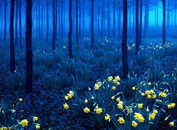 El bosque de la Bella y la Bestia: Selva Negra, Alemania