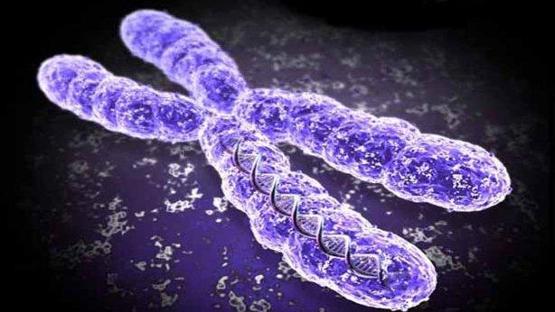 Un cromosoma: En su extremo posee los telómeros | meedicina.com
