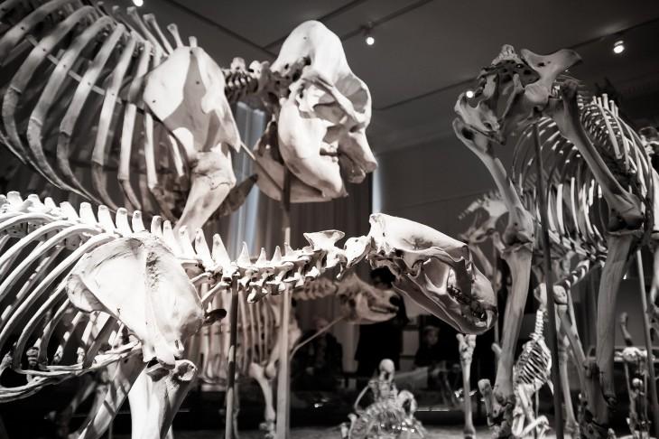 Interior del Museo de Historia Natural de Helsinki | Teppo Kotirinta (CC) Flickr