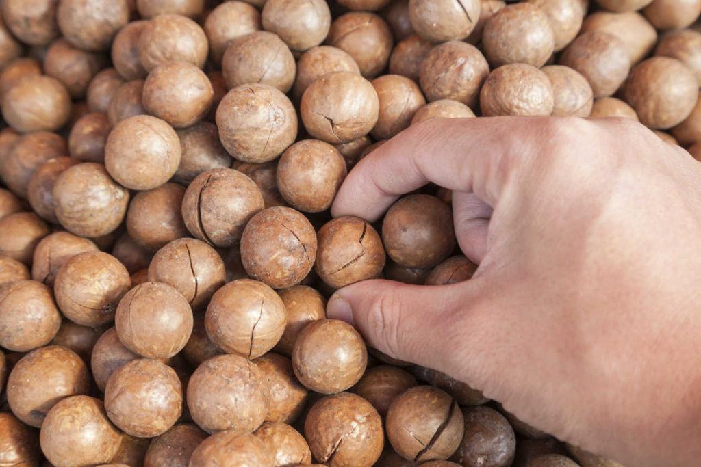 Nueces-de-macadamia-para-reducir-el-colesterol-0_0