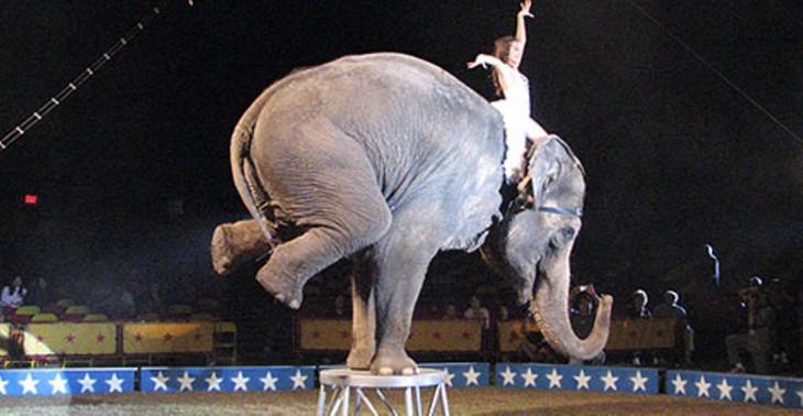 www.animalabusersspotlight.com