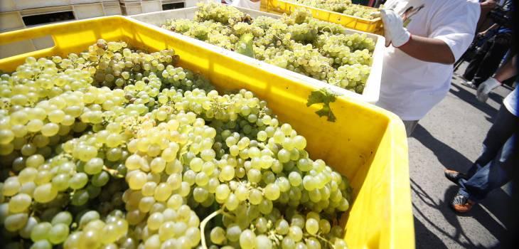 exportadores-uva-bio-bio-talcahuano
