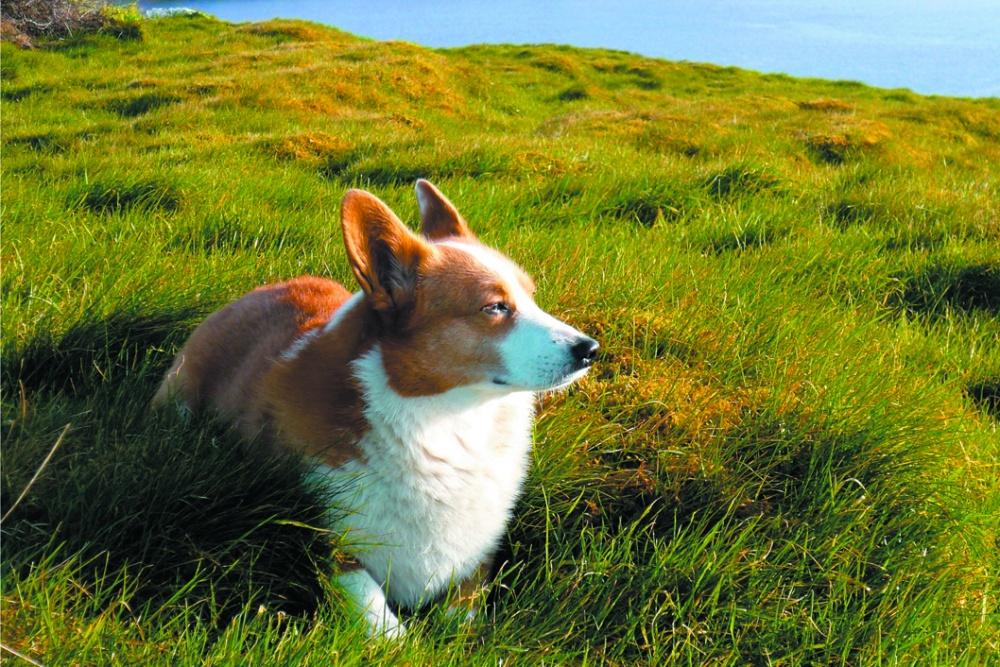 Fotografía de Clement, el perro del escritor, que también integra la muestra | palaisdetokyo.com