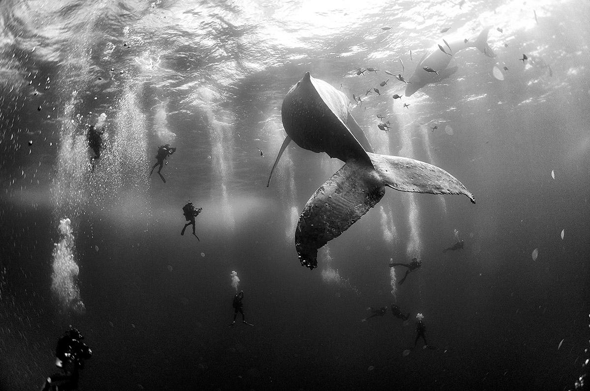 ┬® Anuar Patjane Floriuk - Whale Whisperers - FB Insta
