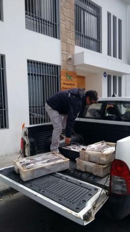 Incautan merluza ilegal en Coquimbo.