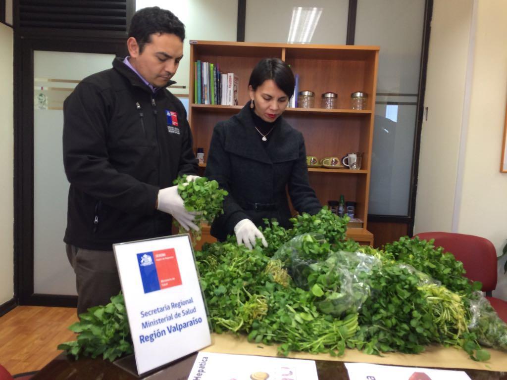Seremi de Salud Valparaíso decomisa berros silvestres tras detectar caso de distomatosis