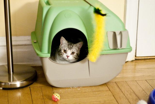 Cistitis en gatos: cómo reconocer sus síntomas