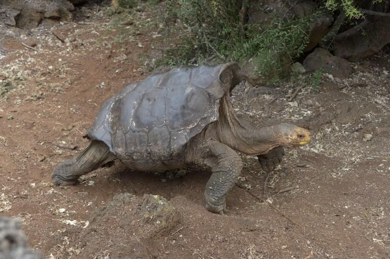 Diego, salvó a su especie en Galápagos