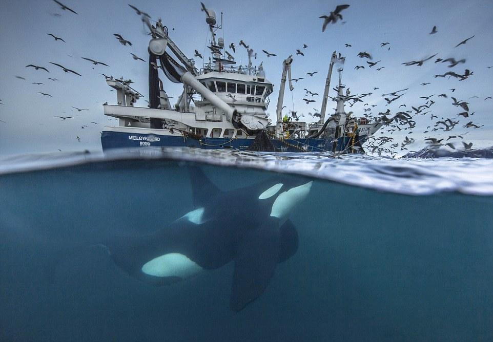 Las majestuosas fotos de los finalistas del concurso Fauna Salvaje