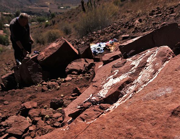 Descubren en Chile restos de un cocodrilo de hace 90 millones de años
