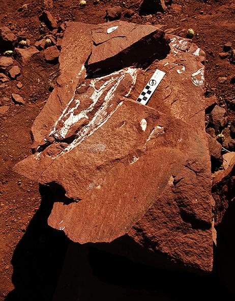 Descubren en Chile restos de un cocodrilo de hace 90 millones de años.