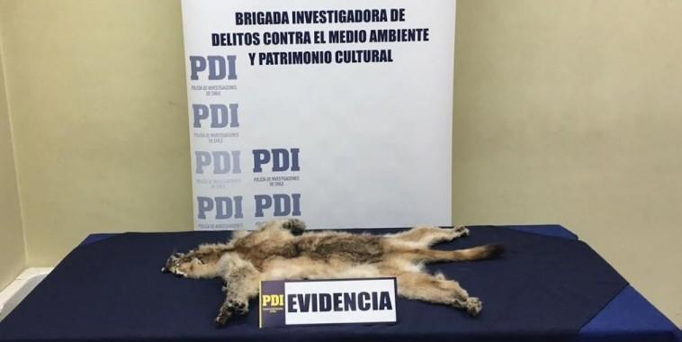 Diario de Aysén