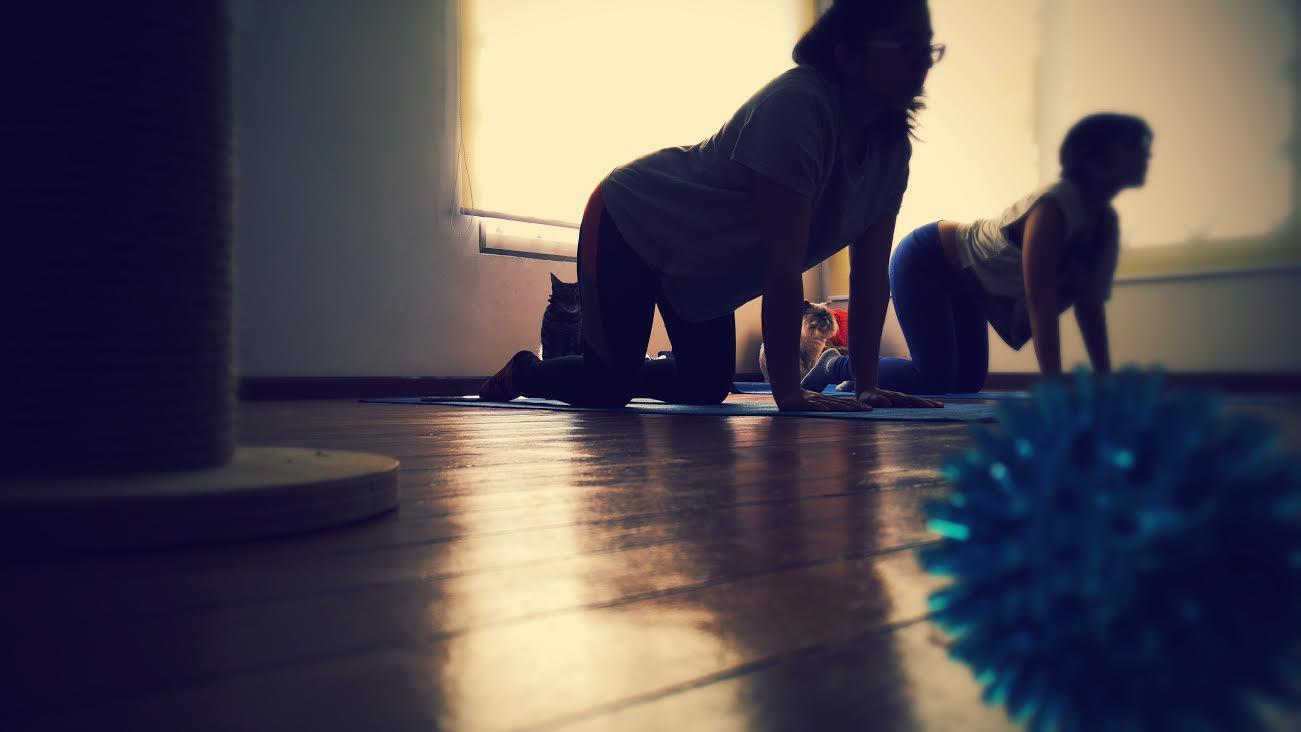 Sesión de yoga con gatos